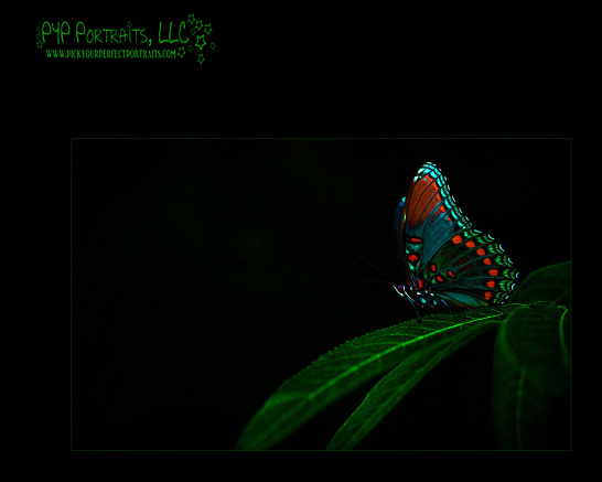 Butterfly16x20logo